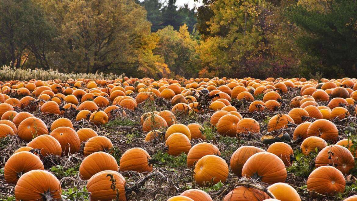 October : What's happening on the farm